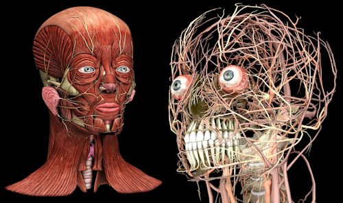 3d Visualization Makes Learning Dental Anatomy A Snap