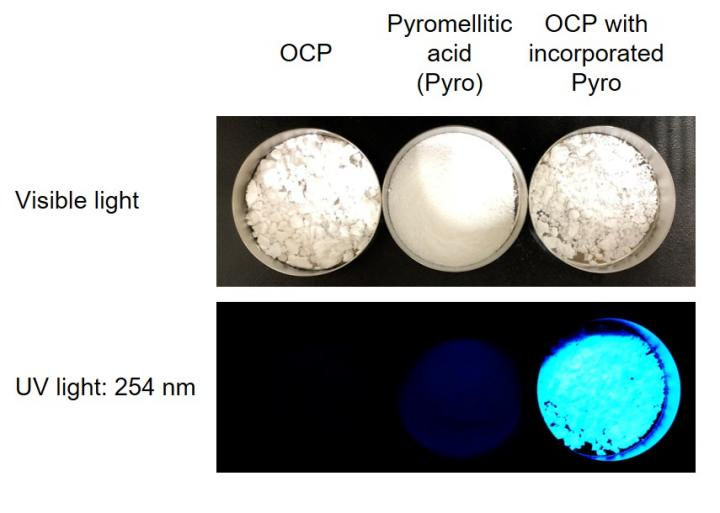 OCP with incorporated pyromellitic acid showed a brilliant blue emission under ultraviolet light, owing to the incorporated fluorescent molecule