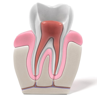 Dead Tooth? Damage to These Living Structures is More Common